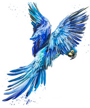 Blue Lear Macaw. Tropical Bird...