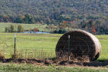 Round Hay Bale Behind Barbed W...