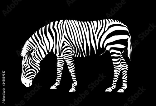 Keuken foto achterwand Zebra Graphical zebra isolated on black background,vector illustration for tattoo and printing