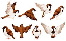 Colorful Icon Set Of Sparrow Bird. Flat Cartoon Character Design. Bird Icon In Different Side Of View. Cute Sparrow For World Sparrow Day. Vector Illustration Isolated On White Background