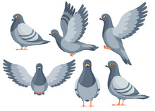Colorful Icon Set Of Pigeon Bird Flying And Sitting. Flat Cartoon Character Design. Colorful Bird Icon. Cute Pigeon Template. Vector Illustration Isolated On White Background