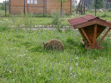 Plant Grass Land Field Animal ...