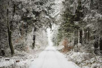 Fototapeta Inspiracje na zimę Verschneiter Forstweg auf dem Meißner
