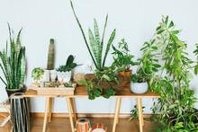 Plants In Pots. Indoor Plants ...