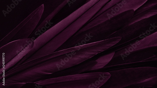 Photo  Exotic texture feathers background, closeup bird wing