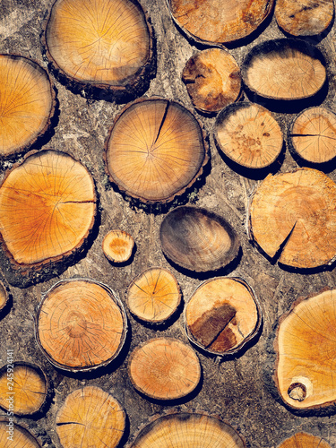 Natural wallpaper with firewood texture - wood pile of dry tree or pattern of logs for your wall design, vertical format. Abstract wooden background with a round slices of lumber.