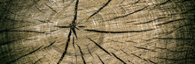 Wooden Surface Of The Trunk Covered With Cracks.