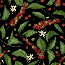 Natural Seamless Pattern With Exotic Coffea Or Coffee Tree Branches, Leaves, Blooming Flowers, Buds And Fruits Or Berries On Black Background. Vector Illustration For Wrapping Paper, Textile Print.