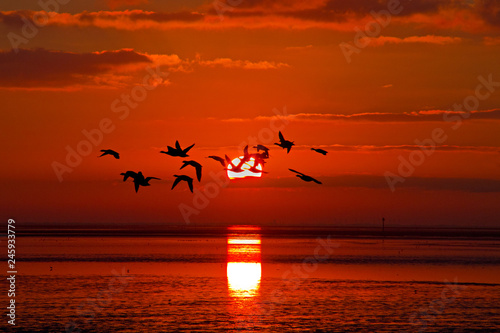 Flock of Geese, silhouettes in front of the setting sun, sky is red