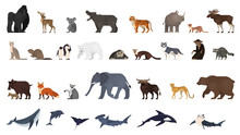Animal Set. Collection Of Exot...