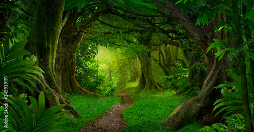Photo Stands Road in forest Deep tropical jungles of Southeast Asia in august