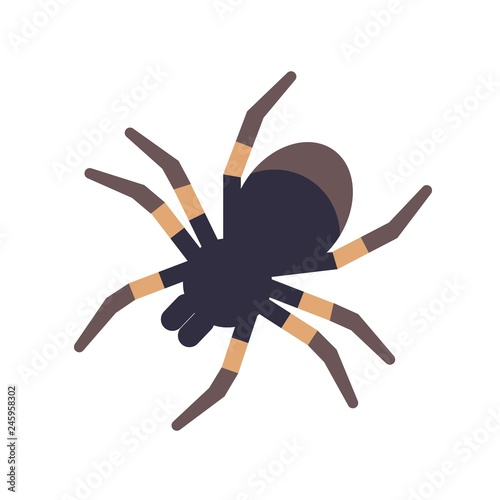 Fotografia Tarantula isolated on white background