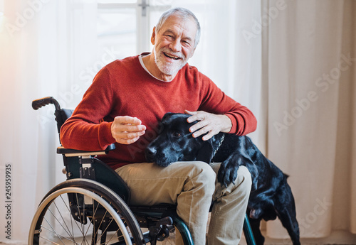 Obraz A disabled senior man in wheelchair indoors playing with a pet dog at home. - fototapety do salonu