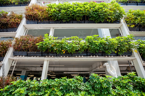 Photo  Green plants on the walls in Singapore