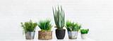 Fototapeta Kwiaty - Cactus and succulent plants in different pots, crop