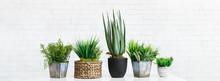 Cactus And Succulent Plants In Different Pots, Crop