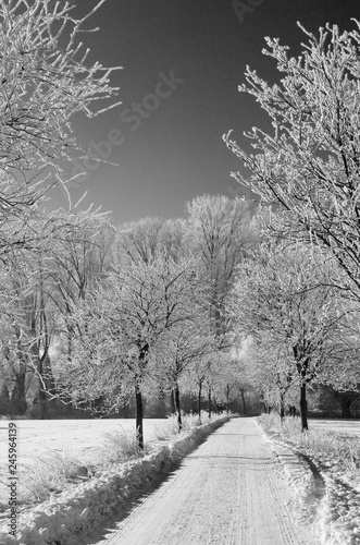 Photo Winter am Niederrhein
