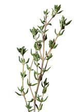 Thyme Fresh Herbs (Thymus Vulg...