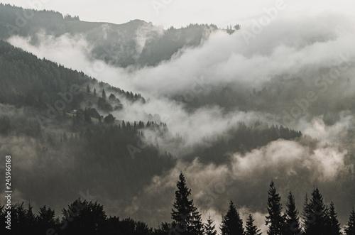 Poster Morning with fog Foggy morning landscape