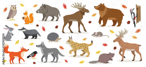 Photographie Big set of forest woodland animals isolated on white, owl, squirrel, hare, bear,