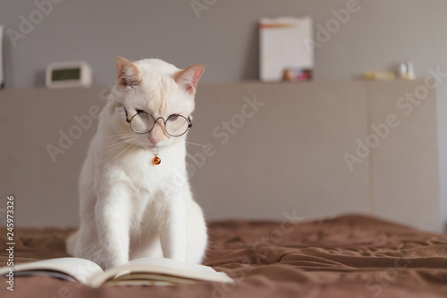 Portrait of White Cat wearing glasses and reading book,pet fashion concept Canvas Print