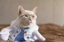 Portrait Of Cute White Cat Dressed Up In Doctor,veterinary Concept.