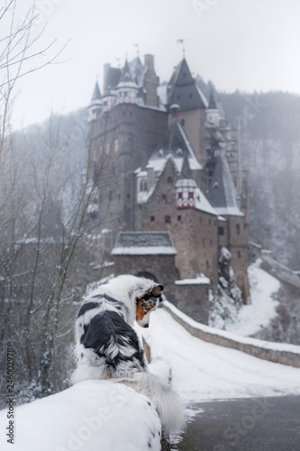 Foto  dog at the castle in winter