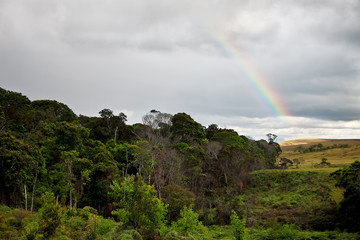 Rainbow over the forest