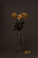 Dried Yellow Roses On Dark Bac...