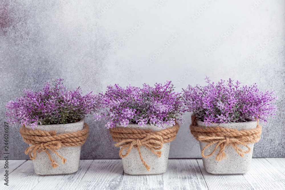 Fototapety, obrazy: Small purple flowers in gray ceramic pots on stone background Rustic style Copy space