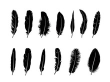 Feather Set.  Different  Birds...