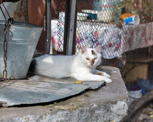 Street Cat Lying On Water Well With An Old Bucket