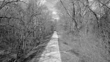 Forest Road In Black And White