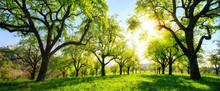 Beautiful Panoramic Green Landscape With Trees In A Row