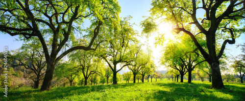 Foto op Plexiglas Pistache Beautiful panoramic green landscape with trees in a row