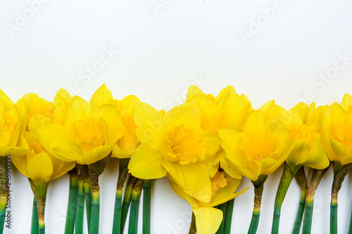 Spring floral background with yellow daffodil flowers