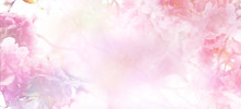 Abstract Floral Backdrop Of Pink Flowers With Soft Style.