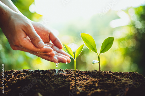 Obraz Close-Up Of Fresh Green Plant Growing,Tree Growth Steps In nature And beautiful morning lighting - fototapety do salonu