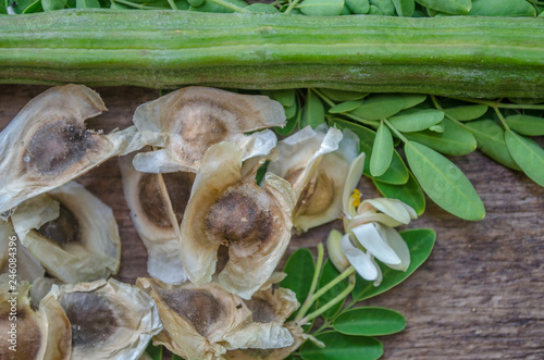 Moringa seeds surrounded by horseradish leaves