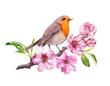 Bird In Cherry Or Apple Flowers. Springtime Blossom, Sakura Branch. Watercolor