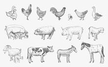 Farm Animals Set. Vector Sketc...