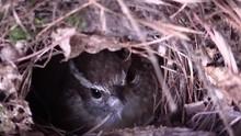 Bird Carolina Wren Sitting On ...
