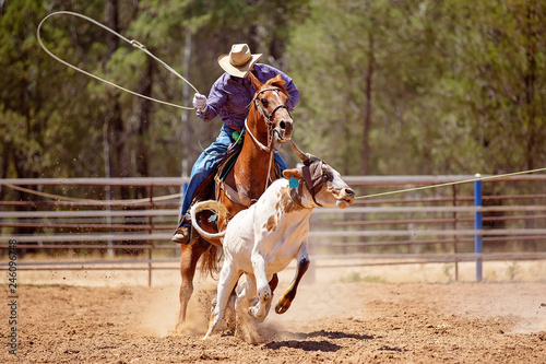 Calf Roping At An Australian Country Rodeo