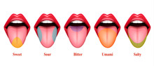 Basic Tastes Realistic Composi...