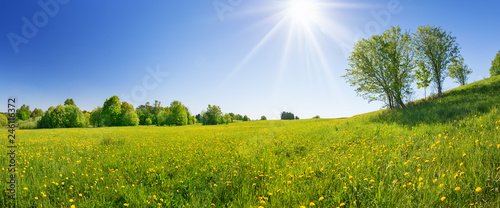 Spoed Fotobehang Weide, Moeras Field with dandelions and blue sky