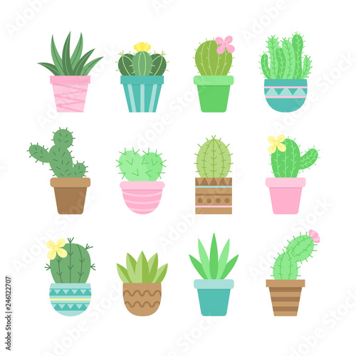 Cute Cactus Set Different Types Of Cacti In Patterned Plant Pots