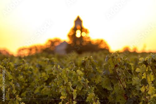 Sunset over the vineyards of Montagne near Saint Emilion Poster Mural XXL