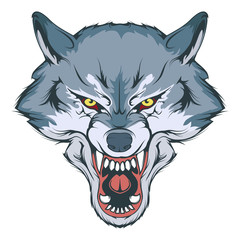 wolf head vector drawing, wolf face drawing sketch, wolf head colored drawing, vector graphics to design