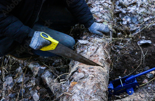 Valokuva  men's hands in  glove sawing with  hacksaw  trunk of  large fallen tree
