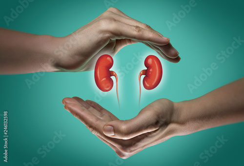Fotografía  A human kidneys between two palms of a woman on  blue and green background
